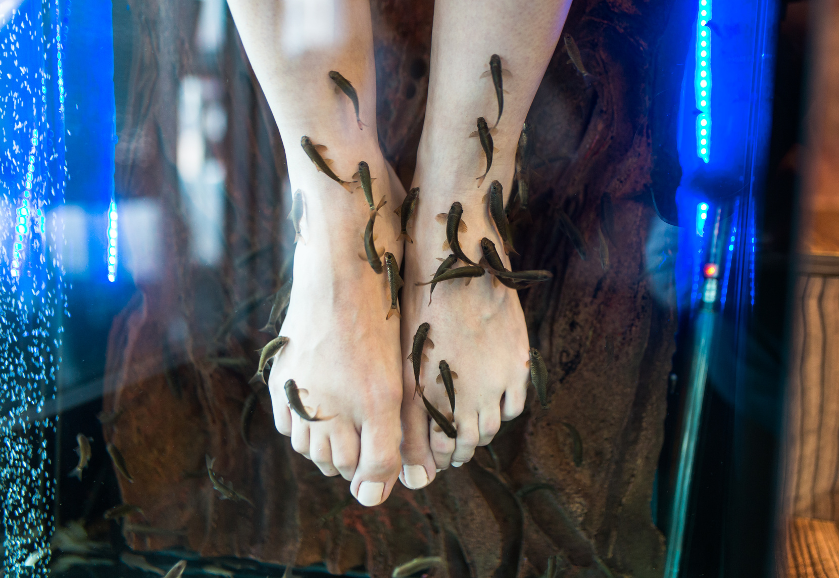 Pedicure spa with fishes. Rufa garra fish spa treatment. Close up. Selective focus, short depth of filed.