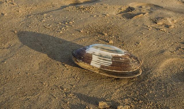 shell-2450501_640